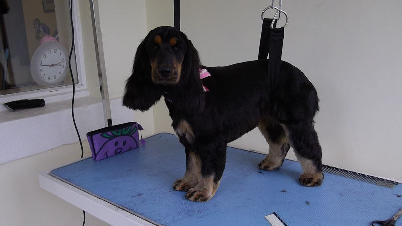 Loch Leven Dog Grooming